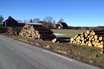Tømmerhogsten mot nye høyder