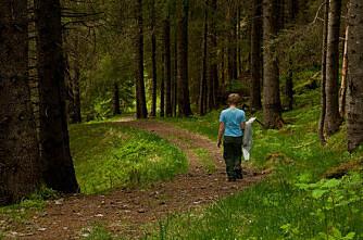 Mer tømmer i skogen, mye hogstmodent