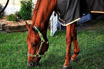 Hestene har talt: Vekk med dekken!