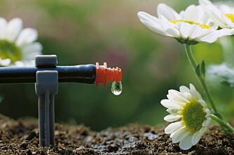 Nytt nettsted: Den enkle hagen