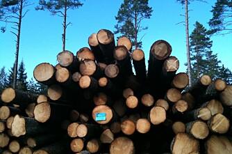 Stabil avvirkning, men tømmerprisene synker