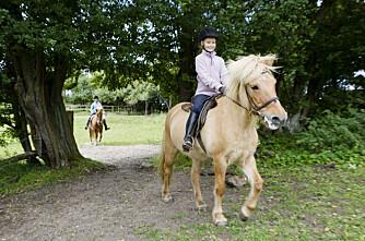 Hester blir lamme av gift i ensilasje