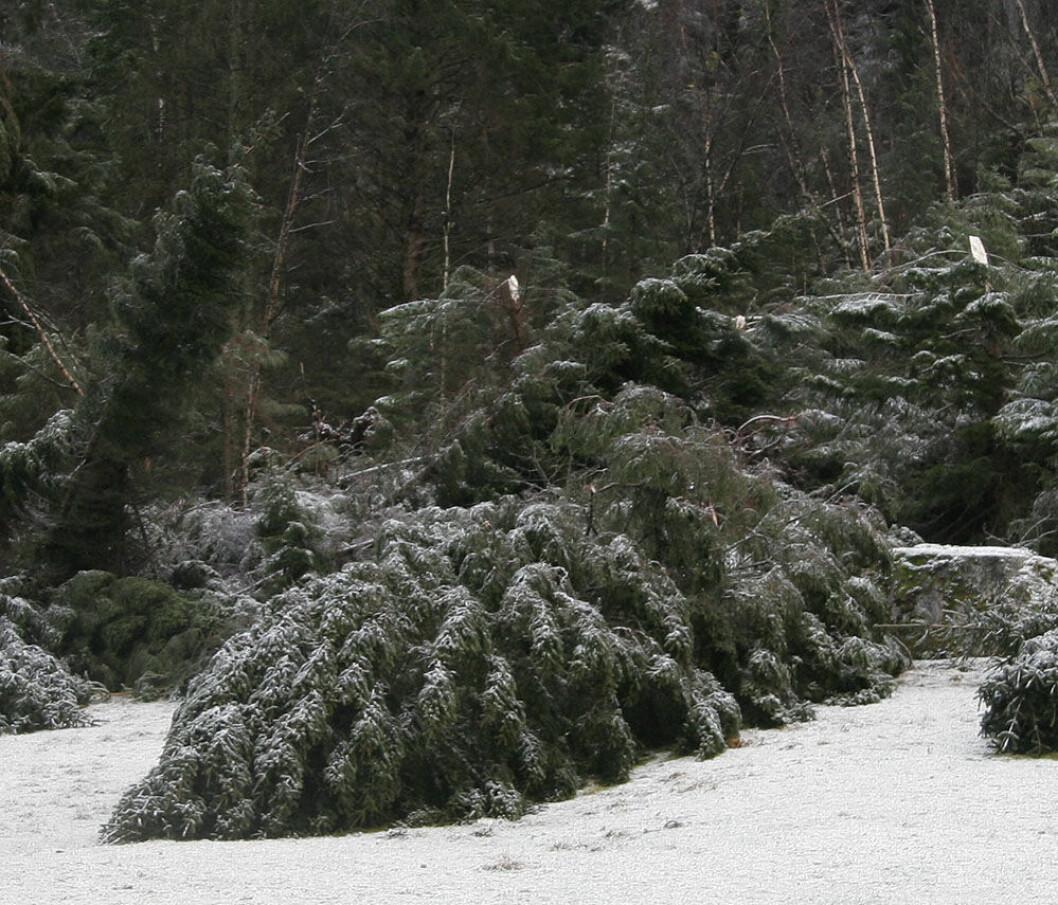 stormfelt skog.jpg