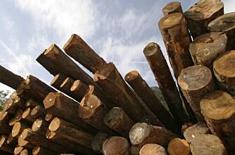 Norske Skogindustrier konkurs