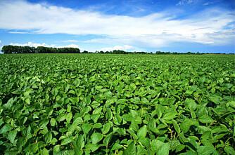 Brasilianske bønder avviser Monsanto-avtale