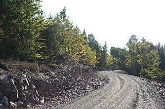 Bruk skogfondet til å utbedre skade på skogsbilveg