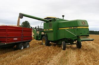 Prognosen for årets kornavling kraftig nedjustert