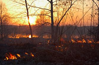 Brannskadd skog frør seg også