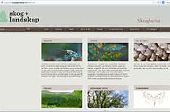 Sjekk skoghelsa med ny nettside