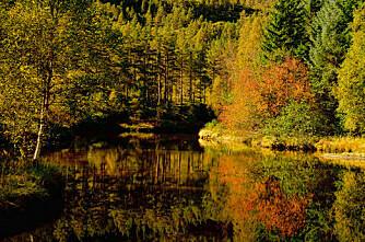 Kjøp skog av Statskog nå
