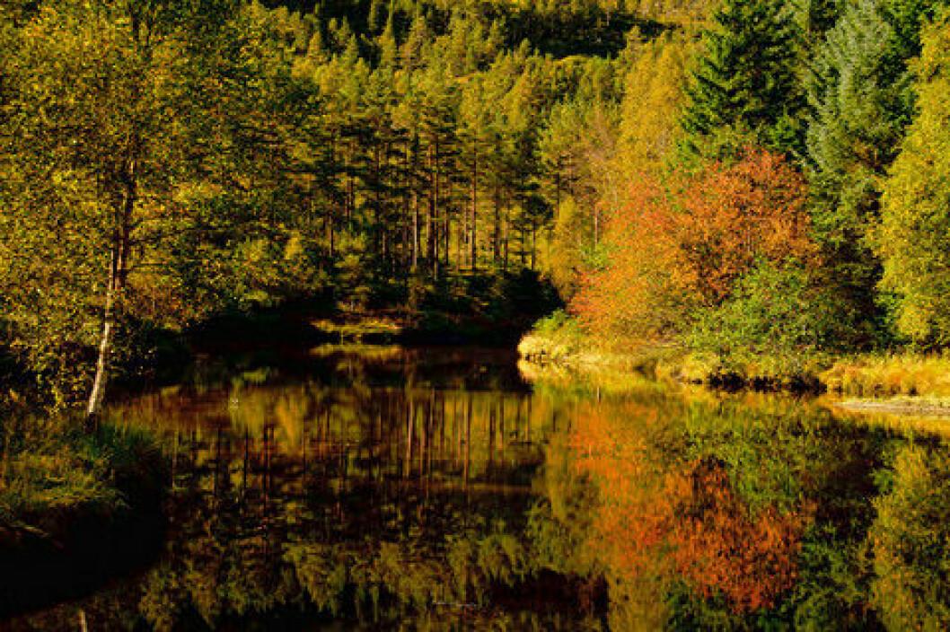 Skog og tjern i høstprakt