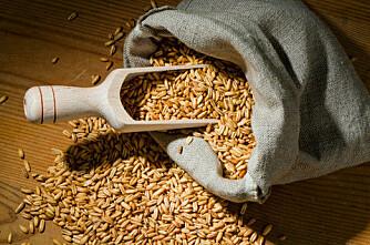 Omsetningsavgifta for korn opp én øre
