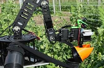 Robot plukker sukkererter