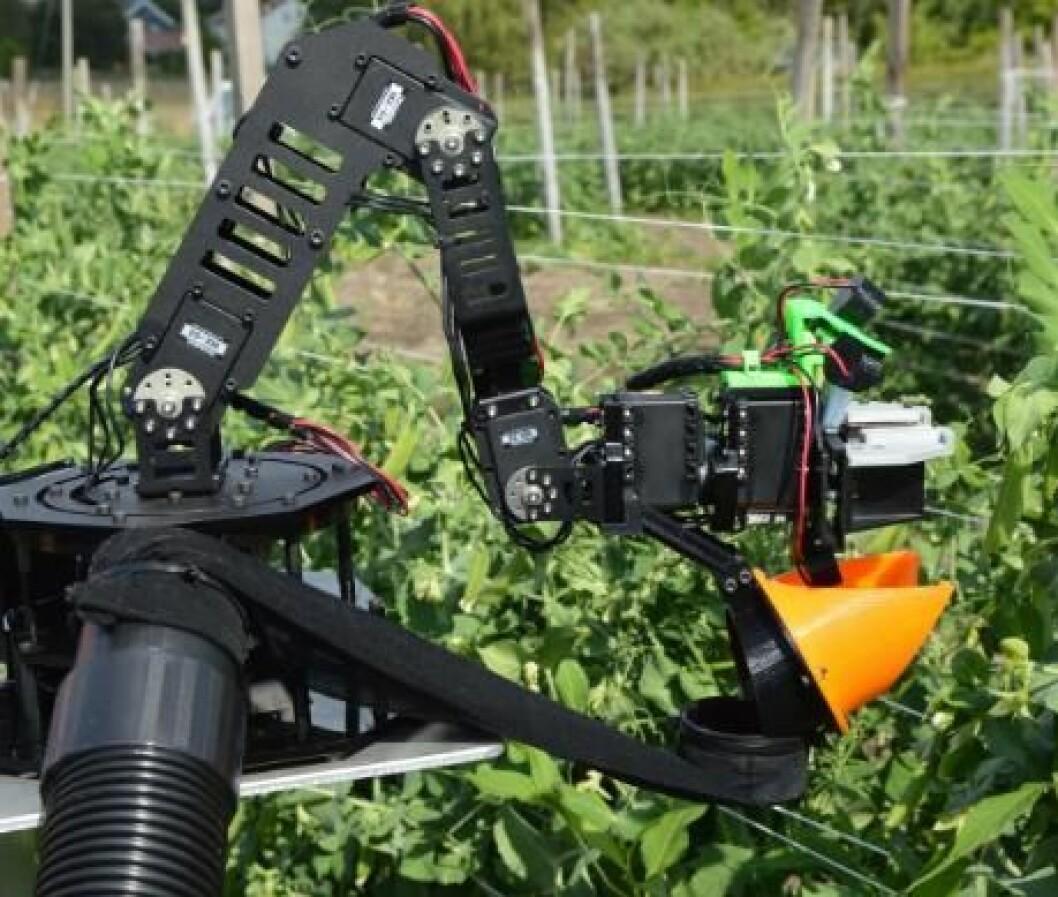 Robotarm som plukker sukkererter