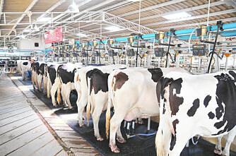 297 kyr mjølker 15 tonn hver