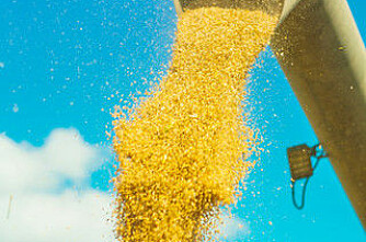 1 168 000 tonn korn i år