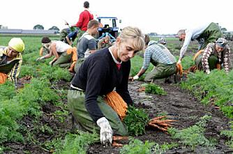 Nye minstelønnssatser i jordbruket