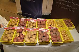 Treff for potetbransjen på Hamar