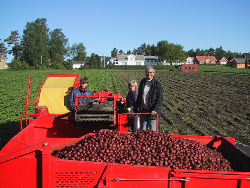 Poteter innhøsting nett