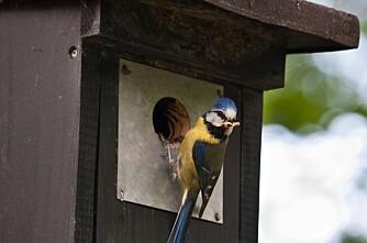Fuglekasser erstatter sprøyting mot insekter