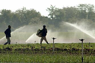 Koppertyver herjer landbruket