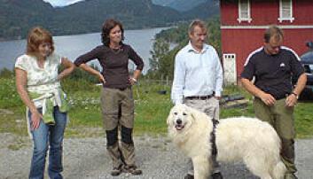 Vokterhund halverte lammetap