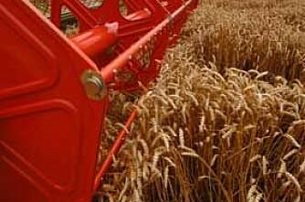 Kraftig prisoppgang på korn og sukker