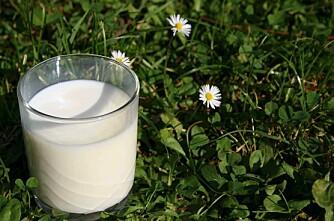 Kumjølk: Kvota er klar!
