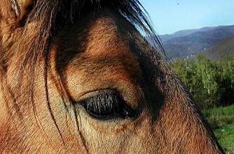 Hester husker som elefanter
