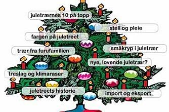 Her er alt du bør vite om juletreet