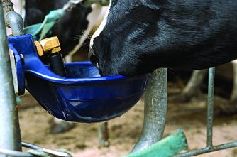 Kubonde: Ikke knip inn på plassen og drikkekarene