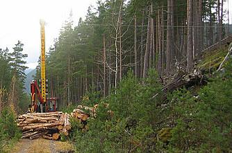 Kabelkran setter fart på skogsdrifta