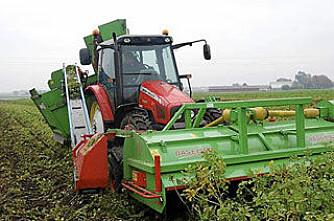 Denne maskinen høster potetris til biogass