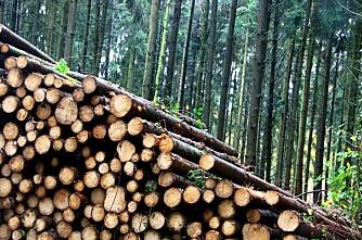Det hogges bare på hver tiende skogseiendom