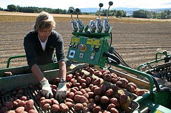 Nordmenn spiser minst poteter i Europa