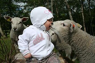 Norske dyr blant de friskeste i verden