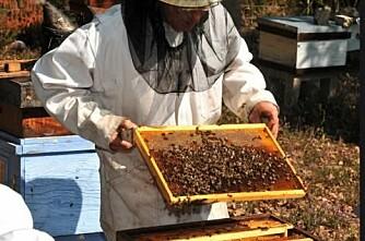 Bier skeit seg til døde