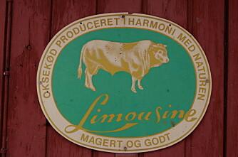 Limousin leder an i Danmark