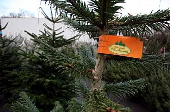 Rogaland og Strand kommune på juletretoppen