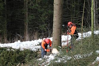 Skogstudiet: Lokker med gratis PC og lærebøker