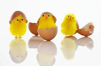 Er nordmenn eggsentriske?