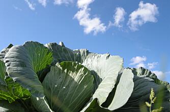 Vestfold er Norges grønnsakshage