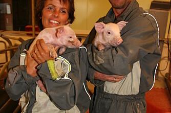 Færre og større svine- og fjørfeprodusenter