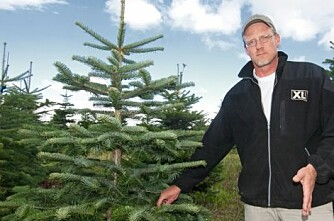 Juletrær krever riktig jord - og profesjonell pleie