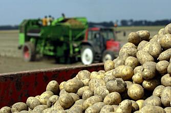 Potetmarkdag og skogdag i Grue