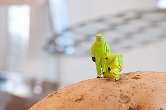 Sverige vil ha potetsamarbeid