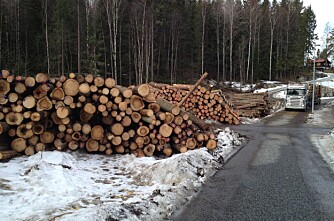 Tømmer-bonanza i 2016