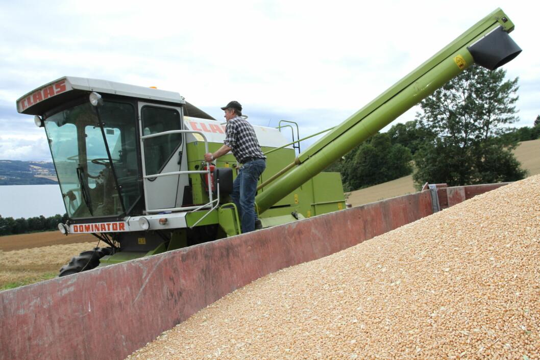 Simen Hulleberg på Nes tar gjerne et steg opp for å bidra til økt kornproduksjon i Hedmark. Arkivfoto