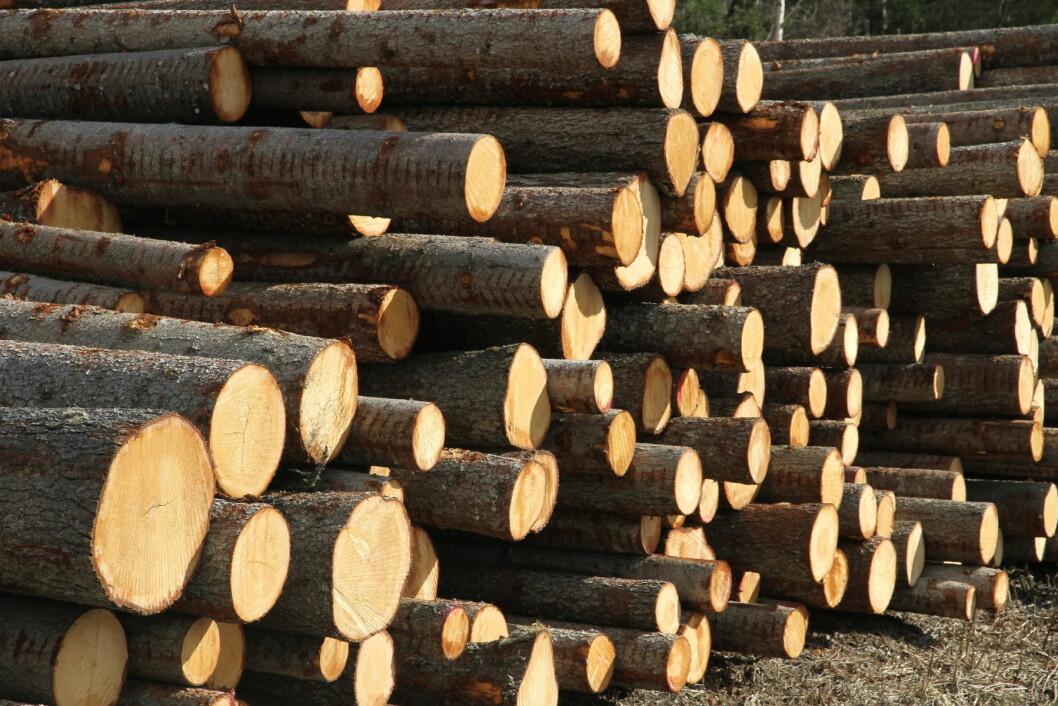 Tømmerprisene har steget og avvirkningen økt.