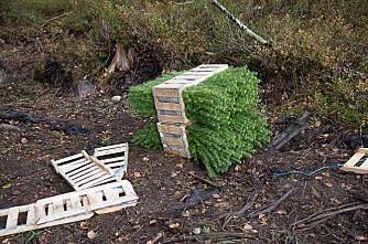 Mer planting og gjødsling i skogen